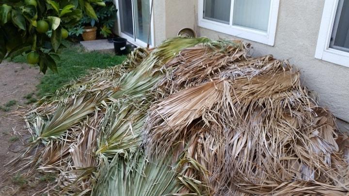 Yard Debris Hauling Palm Frond Removal In Pleasanton