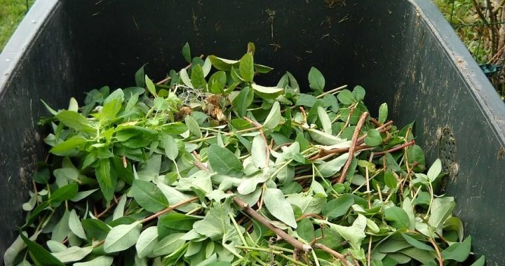 Green waste removal and hauling service for Dublin, CA and the entire San Francisco Bay Area
