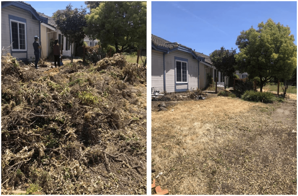 Green waste tree trimming and hauling in San Jose, CA. Before and After!